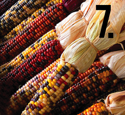 Maize Ears: colorful corn husks that scream autumn... popcorn anyone?